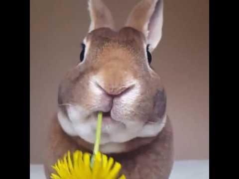 Как кролик жует цветок