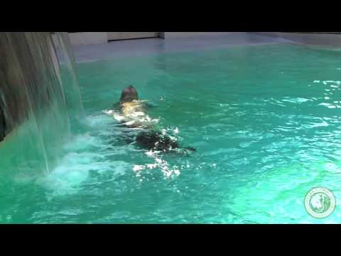 Cleveland Metroparks Zoo's seal and sea lions