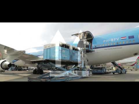 Carrying and caring Jumping Horses with Air France KLM Cargo