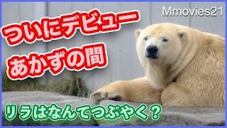 【ホッキョクグマのつぶやく声】あかずの間初体験と苦手なもの Polar Bear tweet and What they don't like