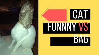 Cat Vs Bag Funnywho Win - Daily Cute Cat Videos