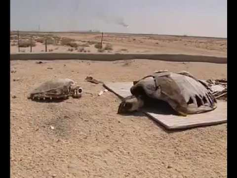 Turtle Conservation at RassLafan | Ras Gas Qatar on Al Jazeera News Channel - Qatar Marine