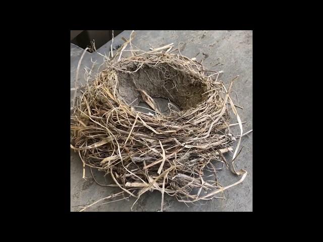 Belle Isle Nature Center | Backyard Bird Quick Tips: Bird Nests
