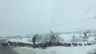 Diyarbakır#lice#kar#koyunsürüsü#
