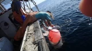 GIANT SHARK EATS OTHER SHARK RELEASE 2