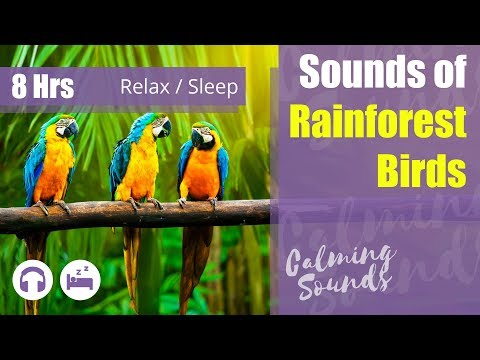 'Jungle Bird' Sounds: Sleeping (8 hours) 🎧😴 Relaxing Rainforest Sounds of Birds #Sleep
