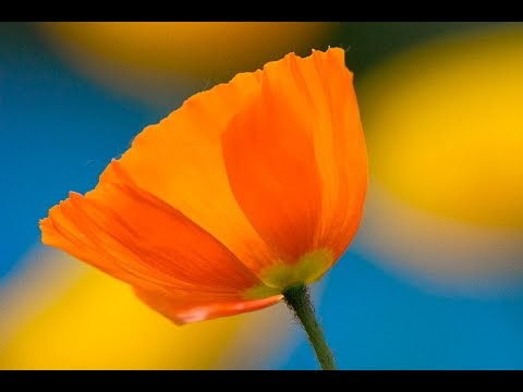 Isolating A Single Flower: You Keep Shooting for Bryan Peterson