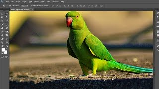 #46 Image, Canvas size, Rotation, Trim, Reveal all in adobe Photoshop