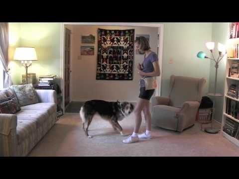 Teach your dog to Spin, Twirl and Twist
