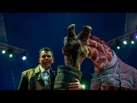 ТРК РИТМ: Цирк із тваринами може повернутися до Рівного