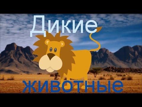 Развивающий мультфильм дикие животные