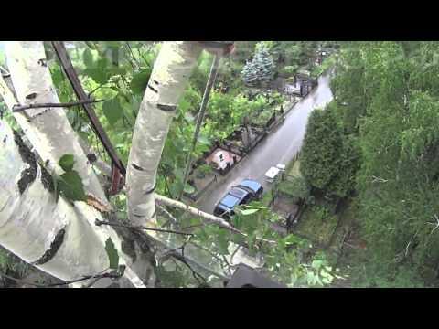 Как удалить дерево на кладбище