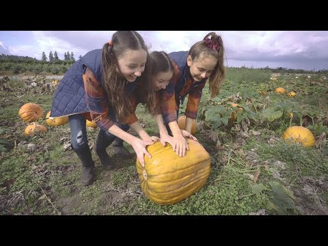Hunter Family Farm Pumpkin Patch Olympia WA