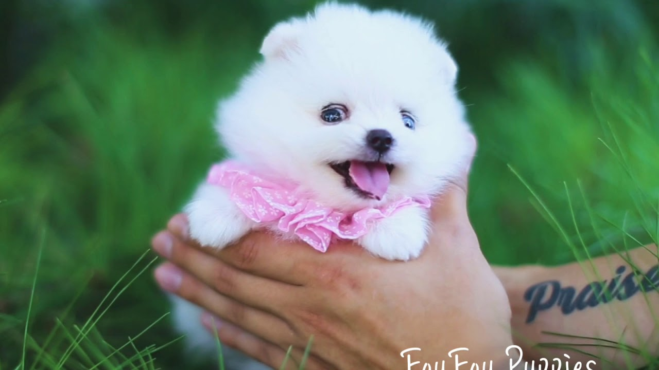 Wow Factor White Teacup Female