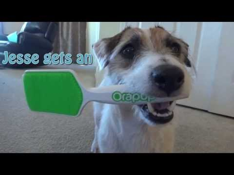 Jesse gets an Orapup! Review by Just Jesse the Jack