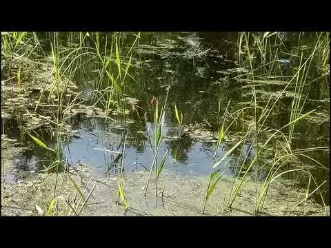 Рыбалка в Омской области. Тюкалинск.