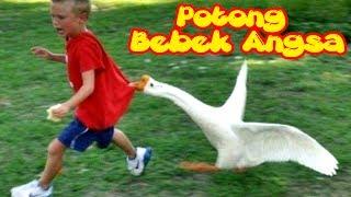 Potong Bebek Angsa - Lagu Favorit Anak-anak Karaoke - Gambar-gambar Bebek Angsa