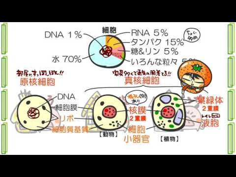 生物1章1話「細胞」byWEB玉塾