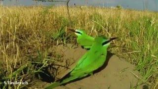 Мир диких птиц
