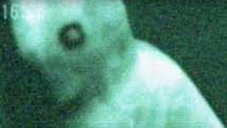 5 Riesige Kreaturen - Mit Kamera aufgenommen!