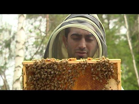 Bee Welcome: Nyanlända med bikunskap hoppet för svensk honung - Nyheterna (TV4)
