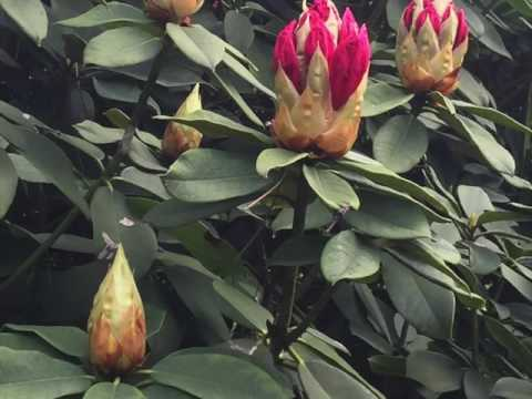 Le Parc Floral de Paris 28 mai 2016