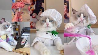 El mejor gatito cocinero de TikTok