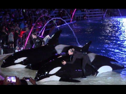 Final Shamu's Celebration: Light Up the Night at SeaWorld San Diego 10-29-16