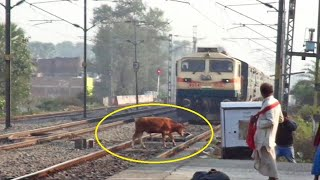 Live Accident !! Speedy Train Hits Cow