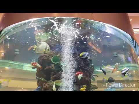 Bhagyanagaram - GVK One Mall - Aquarium Full HD