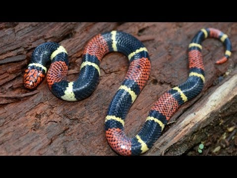 How to Take Care of a King Snake | Pet Snakes - YouTube