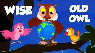 Wise Old Owl | Schoolies Cartoon Videos | Rhymes For Babies