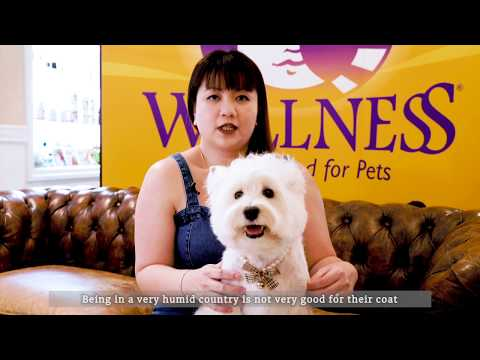 Wellness Top 10 Breeds: West Highland Terrier