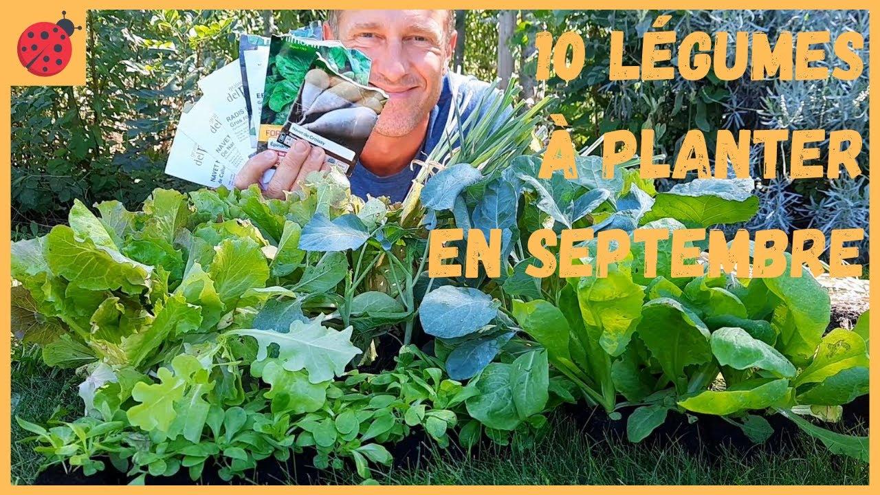 10 légumes à planter en septembre au potager ! - YouTube
