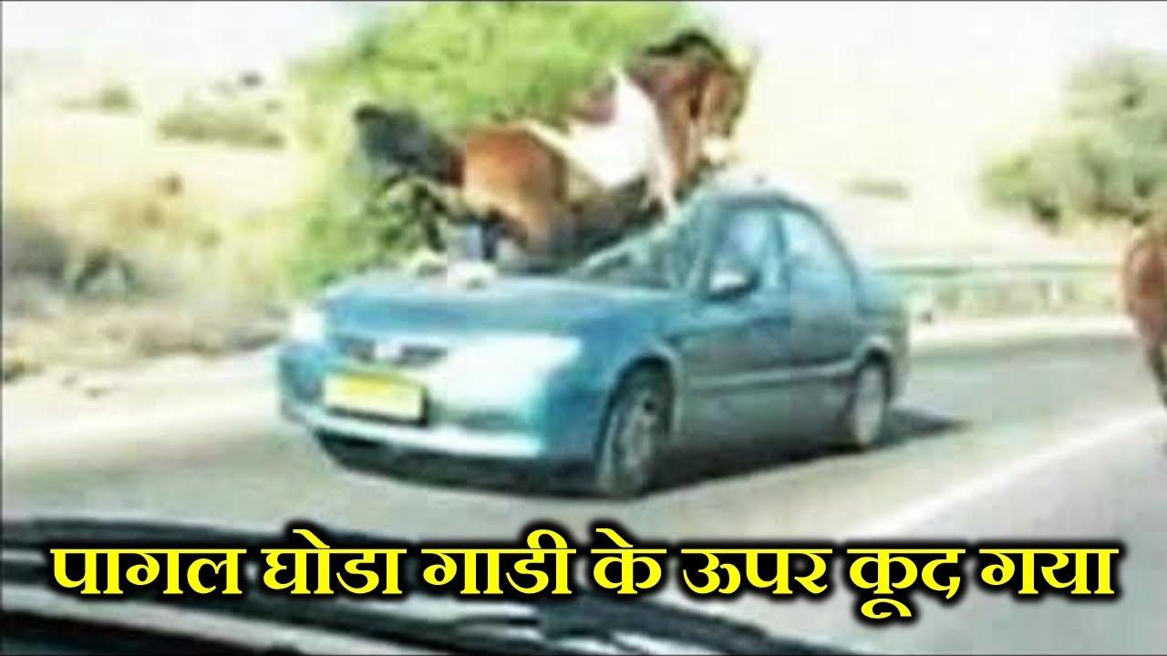 जानवरों को गाड़ियों से इतनी नफरत क्यों होती है ? WHY DO ANIMALS HATE VEHICALS SO MUCH ?