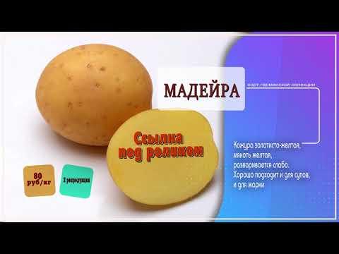 Картофель семенной Мадейра описание сорта, картофель Ирбитский