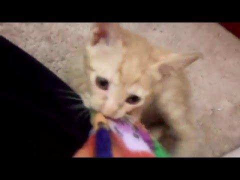 Cinder Babies - 021416