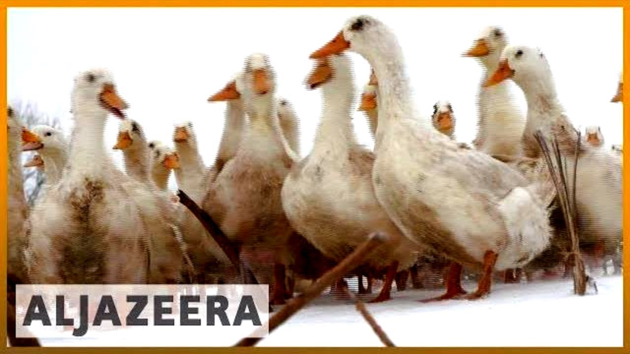 🇺🇸 US: Small farmers regret voting for Trump | Al Jazeera English