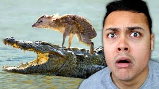 REACTING TO ANIMALS THAT SAVED OTHER ANIMALS