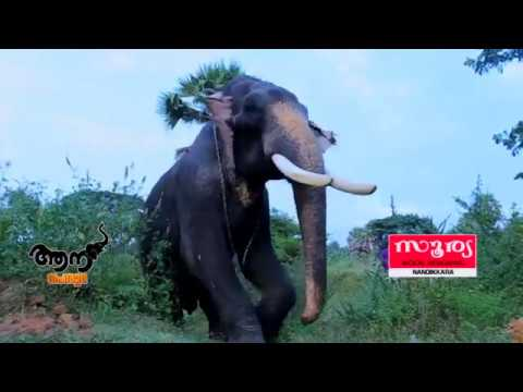 Kiran Ganapathi  (aana peruma episode -35 )