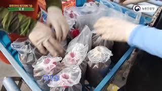 29.흑목이버섯 봉지 재배기술