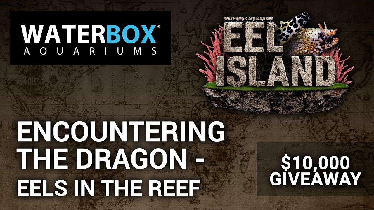 Eel Island - Waterbox Aquariums