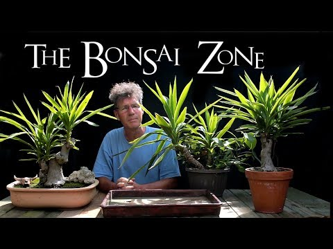 The Bonsai Zone, Part 2 of new Bonsai Benches and a Desert Landscape, Aug 2017