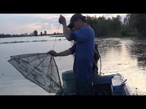 Đặt 3 lồng Bát Quái được bao nhiêu cá. (fishing)