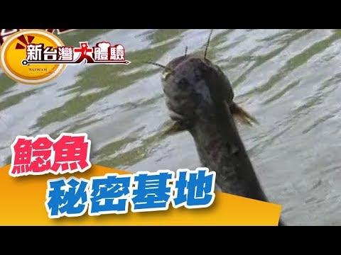 捕捉鯰魚的秘密基地 意外抓到稀有過山蝦《新台灣大體驗》第167集 廖慶學