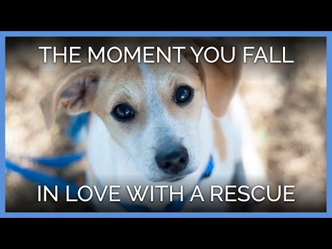 That Moment When You Fall in Love With a Rescued Animal