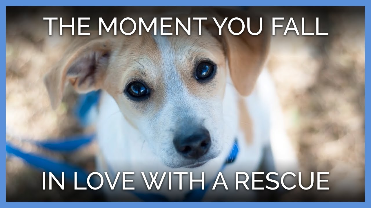 that-moment-when-you-fall-in-love-with-a-rescued-animal