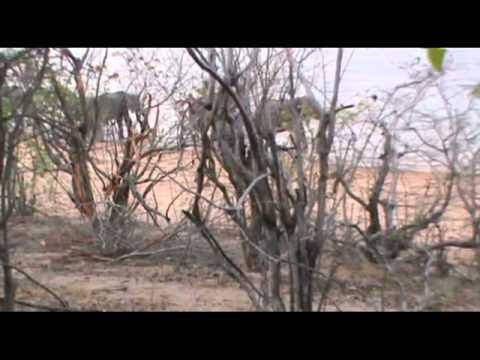 Elephant hunts