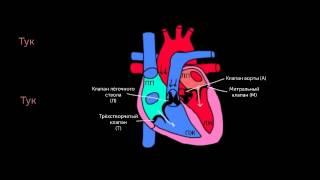 Тоны сердца