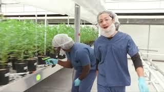 Explore Curaleaf Florida's Cultivation Facility!